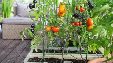 How to Start a Garden in Your Tiny Home Backyard 13