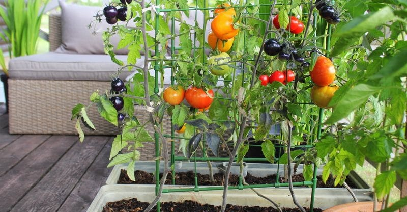 How to Start a Garden in Your Tiny Home Backyard 8